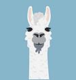 alpaca lama portrait vector image