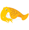 Cuttlefish vector image