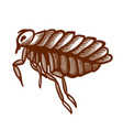 flea hand drawn icon wingless insect jumping vector image