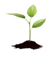 green sprout growing out from soil isolated vector image vector image