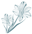 Vintage Lily Flower vector image vector image