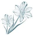 Vintage Lily Flower