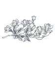 hand drawn magnolia branch beautiful vector image vector image
