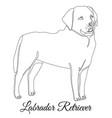 labrador retriever dog outline vector image vector image