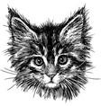 portrait cat vector image vector image