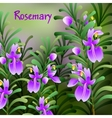 rosemary background Useful green herbs delicious vector image