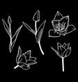 tulip contour set black vector image vector image