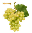 white sweet table grapes fresh fruit 3d realistic vector image vector image