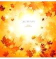 bright autumn background