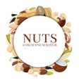 Healthy food concept with different nuts vector image vector image