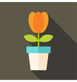 Pot with tulip flower vector image vector image