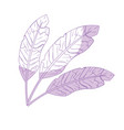 silhouette beauty feathers style with decoration vector image vector image