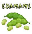 vegetable edamame beans white background im vector image