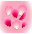 pink rose petals with drops water vector image vector image