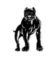 pitbull dog vector image vector image