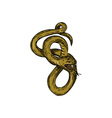 Viper Coiled Ready To Pounce Drawing vector image vector image