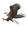 bald eagle attack vector image