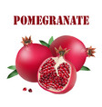 fruit pomegranate white background image vector image