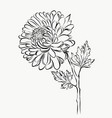 lovely isolated big flower sketch grafical paint vector image vector image