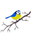 titmouse on a branch vector image