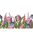 border with proteas flowers trendy floral vector image vector image