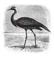 numidian crane vintage vector image vector image