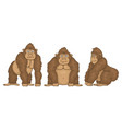 set gorillas vector image
