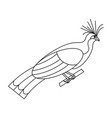tropical bird hoatzin on a white background vector image vector image