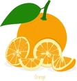 Orange slices collection of vector image vector image