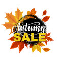 autumn sale banner design vector image vector image