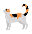 calico cat flat design vector image vector image
