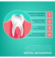 Teeth infographic A-05 vector image vector image