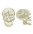 Two human skulls vector image