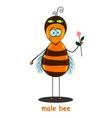 male bee vector image