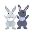 cute rabbits cartoon vector image vector image