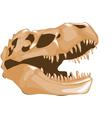 dinosaur bones vector image