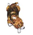 Sleeping Beagle vector image vector image