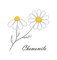 card with chamomile isolated on white background vector image vector image