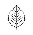 poplar leaf linear icon vector image vector image