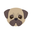 pug dog cartoon vector image vector image