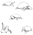 Turtles Pencil sketch by hand vector image vector image