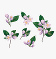 watercolor violet flowers isolated on a white vector image