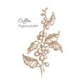 coffee sketch 8 vector image
