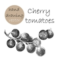 Hand Drawn Cherry tomatoes Monochrome sketch vector image