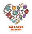 bad and good bacteria poster with microelements in vector image