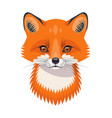 funny red fox portrait on white vector image