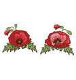 hand drawn red poppies isolated on white vector image vector image