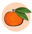 Hand drawn tangerine with green leaves vector image vector image