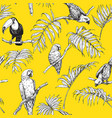 parrots and toucan sketch pattern vector image vector image