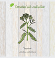 pure essential oil collection yarrow wooden vector image vector image